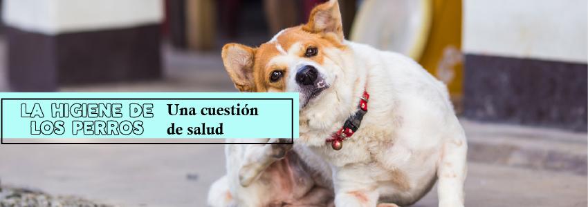 ¿Qué consecuencias trae las pulgas a tus mascotas?